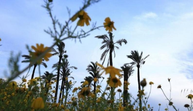 حالة الطقس: أجواء ربيعية معتدلة