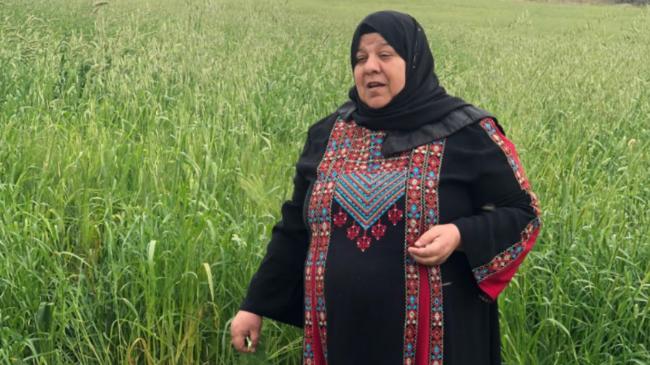 شركة الأرض تتحول الى أكبر مصدر لزيت الزيتون الفلسطيني