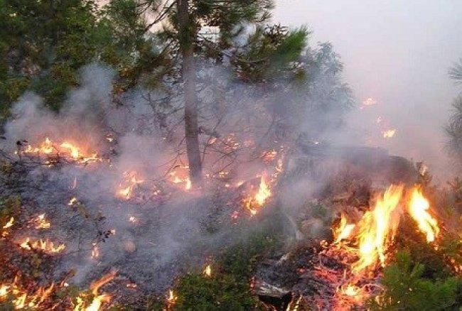 حريق ضخم يلتهم مئات الدونمات جنوب طولكرم