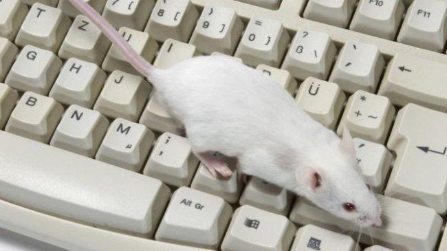 فئران لمحاربة الأخبار المزيفة.. هل يمكن ذلك؟