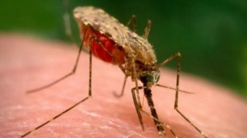 أكثر من ألف إصابة بالملاريا في الجزائر