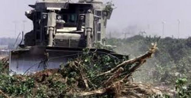 الاحتلال يجرف أراضي زراعية ويقتلع العشرات من أشتال الزيتون جنوب بيت لحم