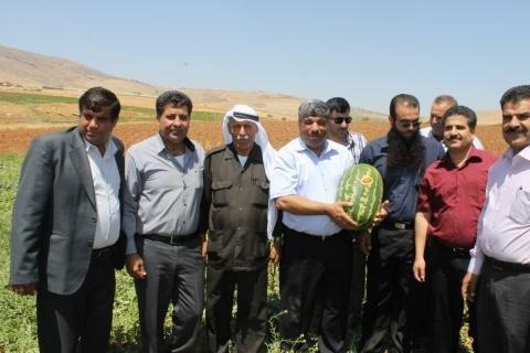 """""""إعدام"""" البطيخ الفلسطيني في مهده"""