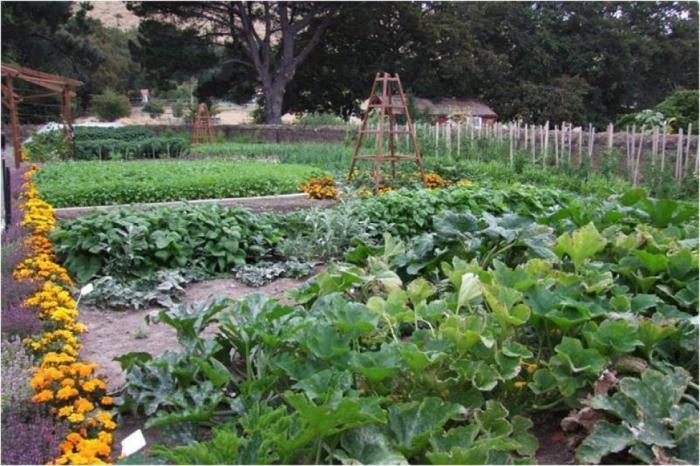 الدورة الزراعية: ممارسة بيئية لوقاية المزروعات من الآفات