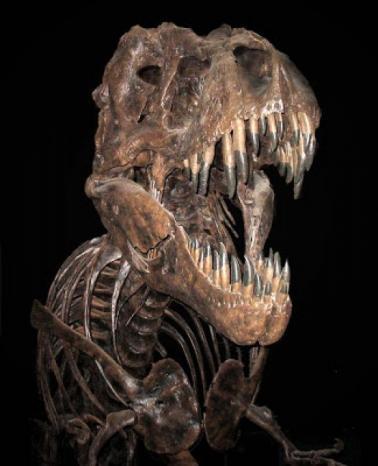 سبب جديد محتمل لانقراض الديناصورات، تعرف اليه