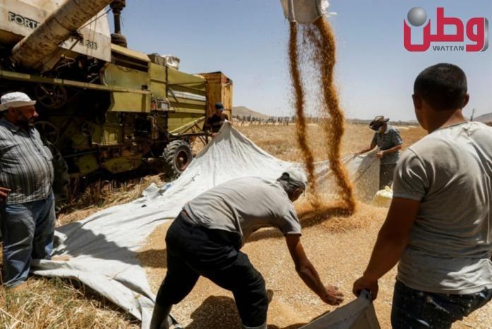 ارتفاع أسعار القمح بعد انكماش المخزون العالمي