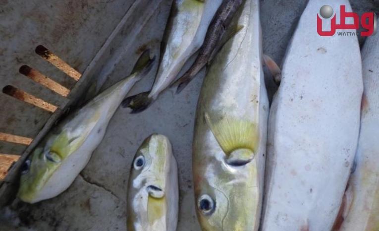 """غزة: حظر بيع وتناول سمك """"الأرنب"""" بعد تسجيل حالات تسمم"""