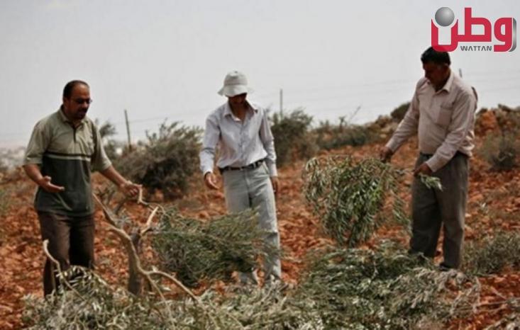 مستوطنون يسرقون معدات لقطف الزيتون من أراضي بورين