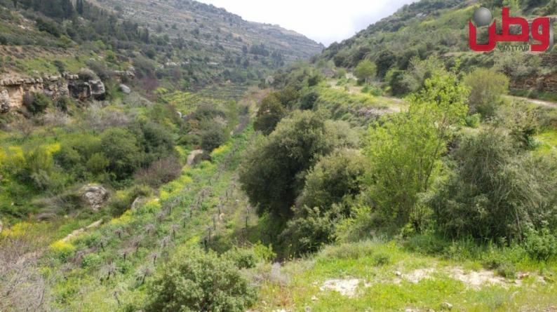 محميات فلسطين: الطبيعة مصدر الحياة والمحميات إحدى وسائل صيانة البيئة
